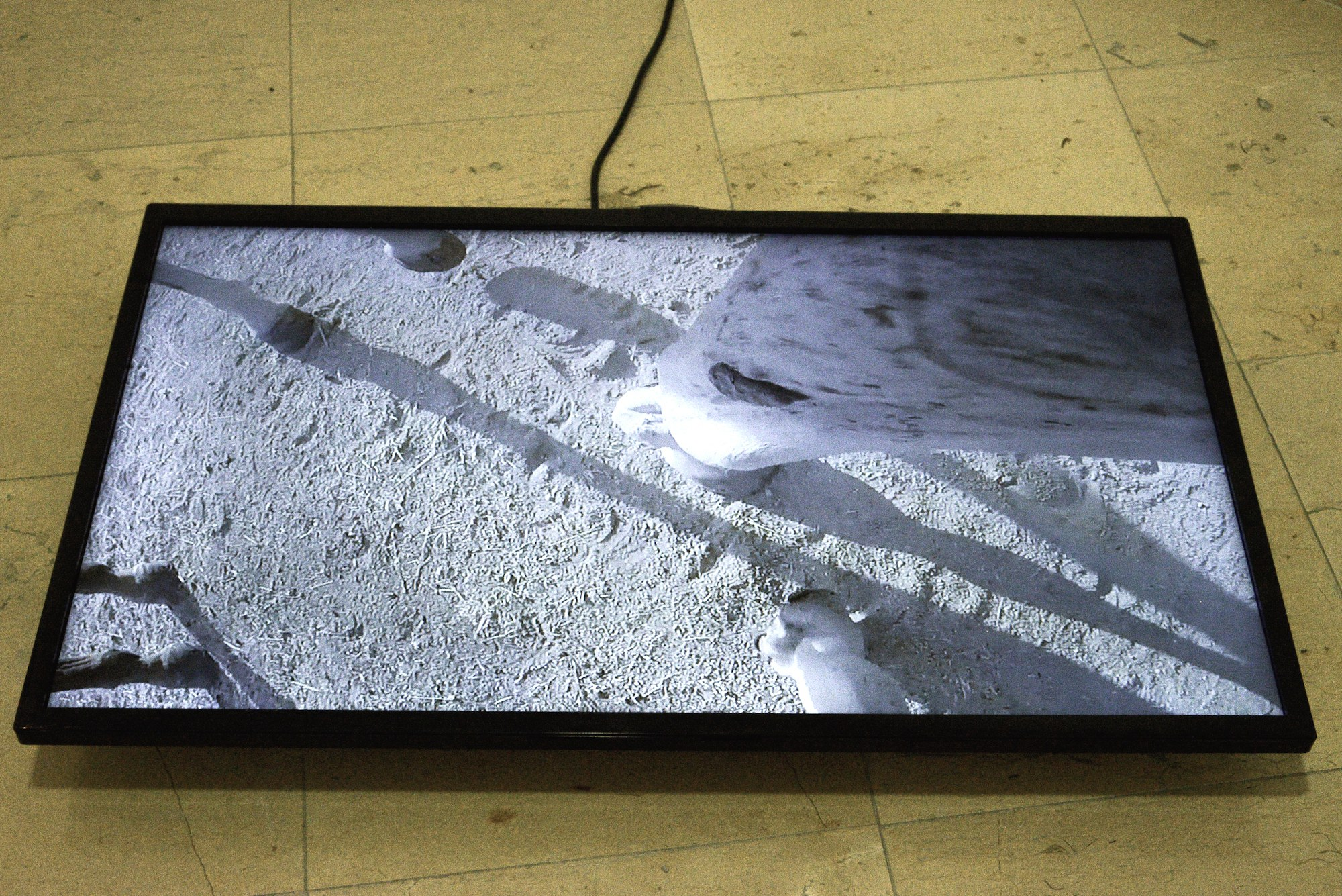 untitled (rushes Antonio / Ardia 2014), videoinstallation, silent, flat screen, variable dimensions, 11'